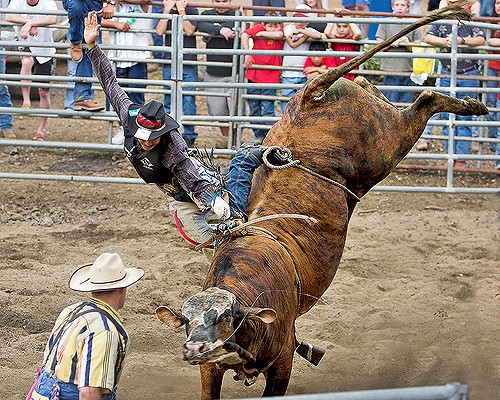 Will The Stock Market Bloodbath Continue or Can The Bulls Break Free