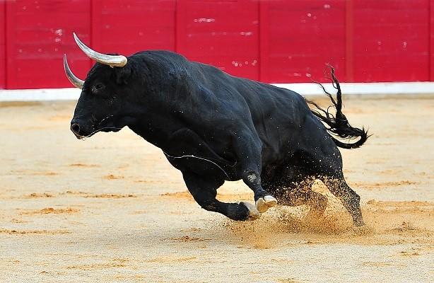 The Bulls Last Stand?